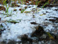 Sztuczny śnieg mineralny na podłożu pokrytym niską roślinnością.
