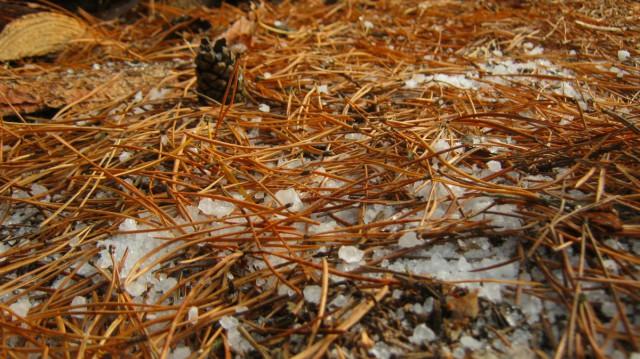 Sztuczny śnieg mineralny pokrywający leśną ściółkę.