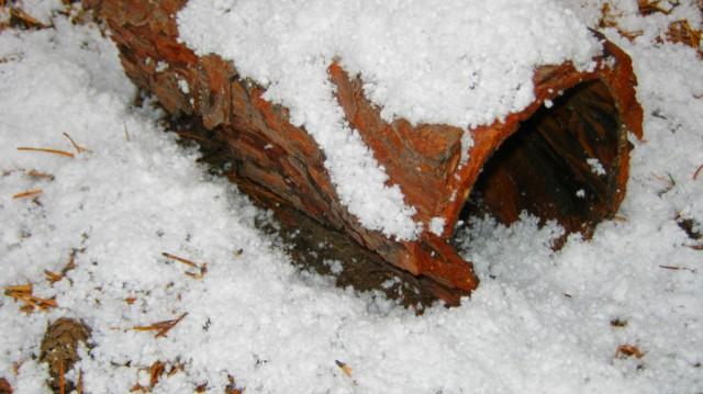 Zimowa sesja fotograficzna, 2012.